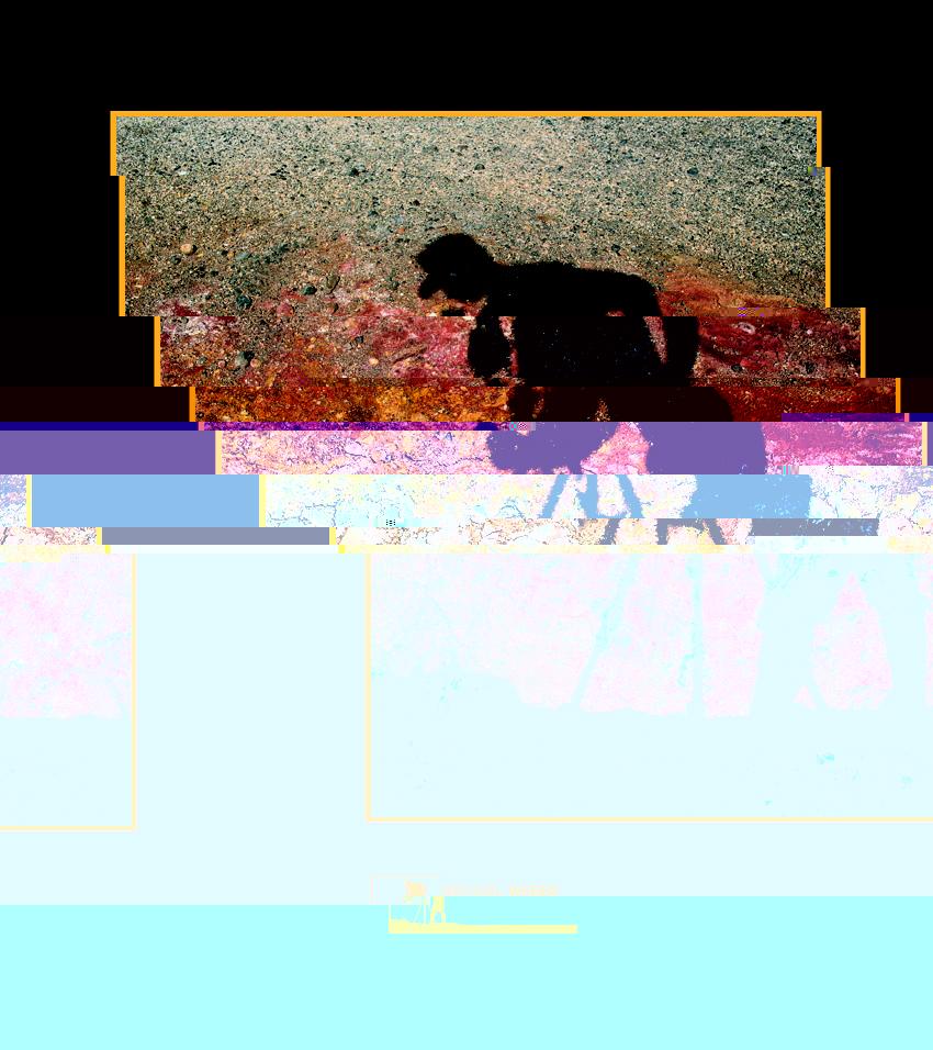 bilder chat Paderborn